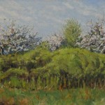 Spring Blossoms, oil-linen, 15x30, 2011