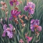Violet Iris, oil-linen, 24x18, 2011